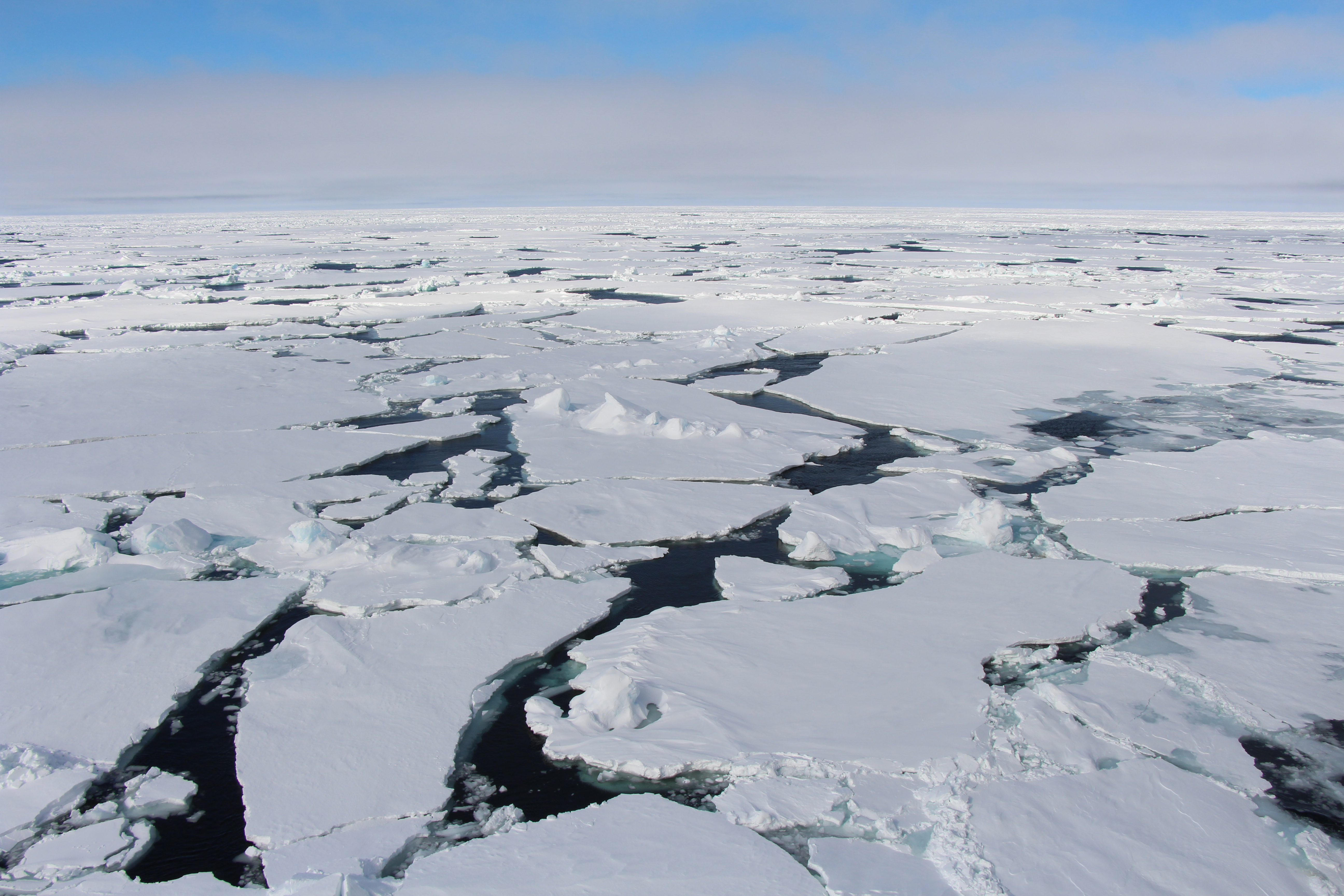 The Arctic sea ice has declined significantly during the last years.